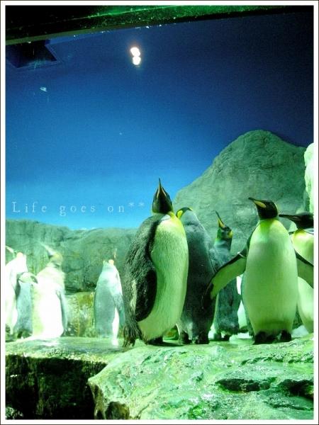 海遊館 ペンギンちゃん *_b0155684_20583020.jpg