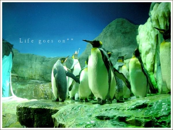 海遊館 ペンギンちゃん *_b0155684_20583180.jpg