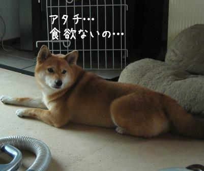 杏の食いしん坊_f0068501_23471563.jpg