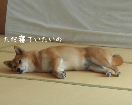 杏の食いしん坊_f0068501_23495017.jpg