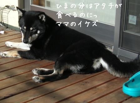 杏の食いしん坊_f0068501_23562257.jpg