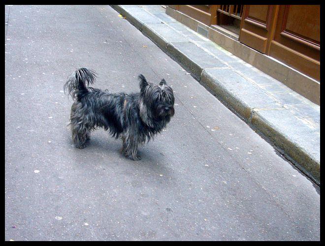 【ワンコCHEIN】街角のワンコ9月12日(サンジェルマン界隈)PARIS_a0008105_19125599.jpg