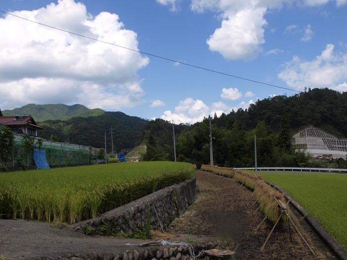 稲刈り後_c0116915_23513367.jpg