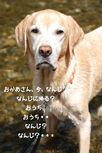 b0138824_16245883.jpg