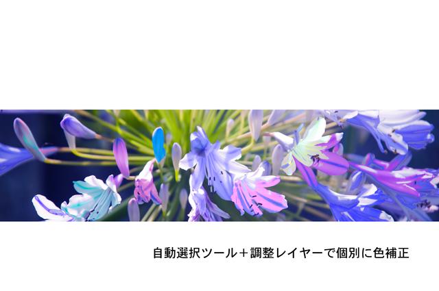 f0176458_1533940.jpg