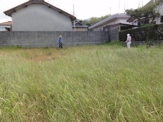 みさき公園団地草刈り:6日目_c0108460_14182884.jpg