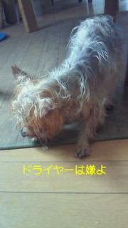 f0192863_1421513.jpg