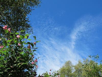 本格的な秋に_a0129867_8581834.jpg