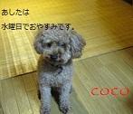 b0094280_1604667.jpg