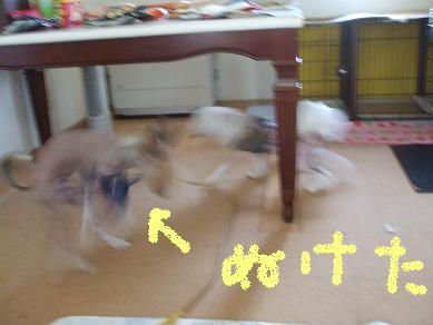 f0179203_17191738.jpg