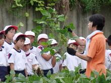 南中山小3年生の子供たちが大豆畑の除草と枝豆の収穫を体験しました_e0061225_16515662.jpg