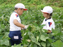 南中山小3年生の子供たちが大豆畑の除草と枝豆の収穫を体験しました_e0061225_1659797.jpg