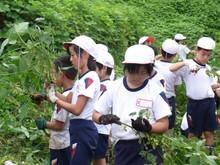 南中山小3年生の子供たちが大豆畑の除草と枝豆の収穫を体験しました_e0061225_1713235.jpg