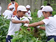 南中山小3年生の子供たちが大豆畑の除草と枝豆の収穫を体験しました_e0061225_1733481.jpg