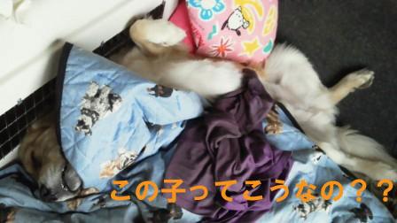 f0176830_22154051.jpg