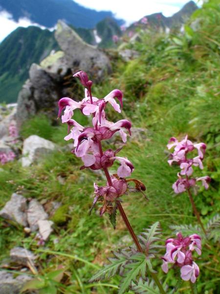 夏休み岩稜歩き-涸沢岳へ_c0177814_0252690.jpg