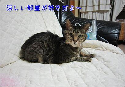 d0139352_011992.jpg