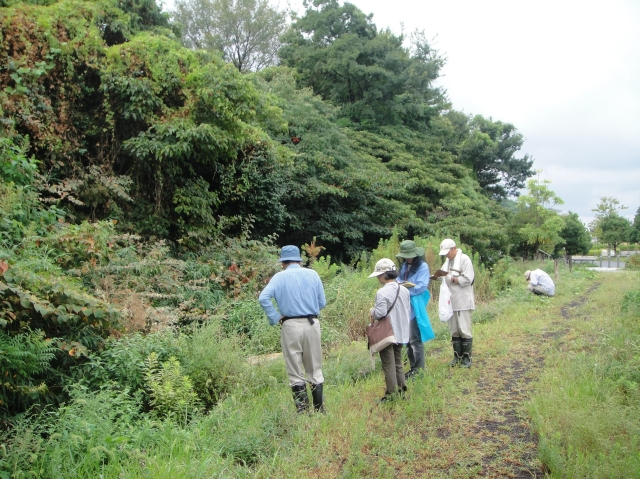 H229月度植物調査_c0108460_16434974.jpg