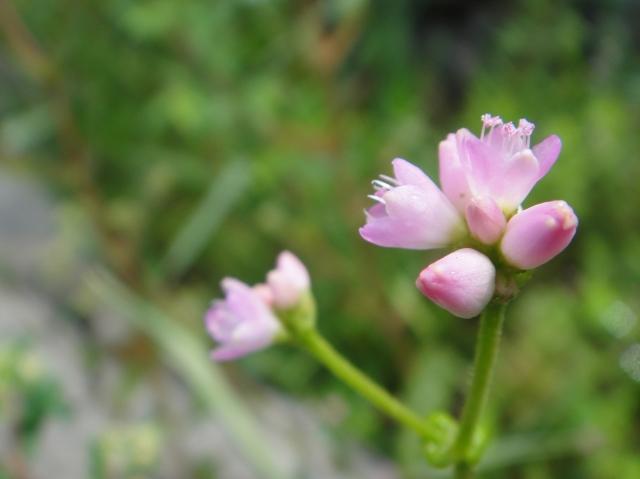 H229月度植物調査_c0108460_16444584.jpg