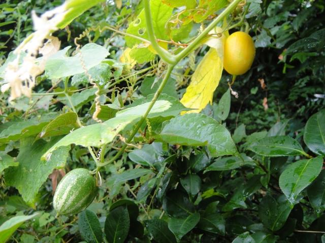 H229月度植物調査_c0108460_1647107.jpg