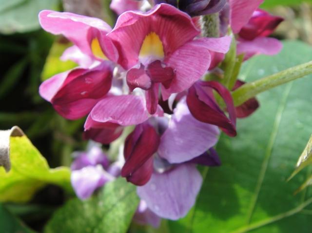 H229月度植物調査_c0108460_16481615.jpg