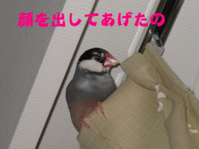 b0158061_2010591.jpg