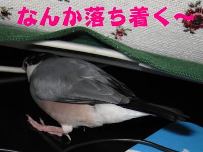 b0158061_20112591.jpg