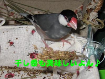 b0158061_2012334.jpg