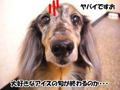 d0020869_12521514.jpg
