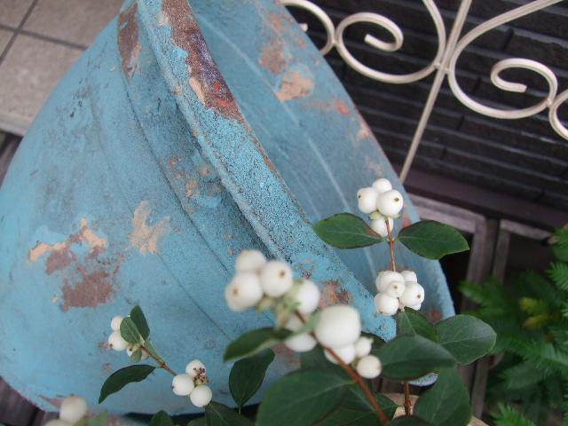 オークリーフ(秋の新着です)_f0049672_1554769.jpg