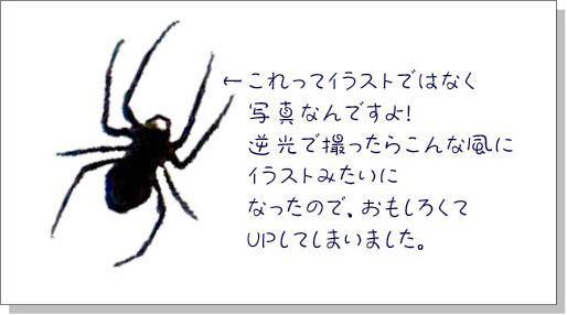 クモのイラストクモの写真 ゆっくり生きる
