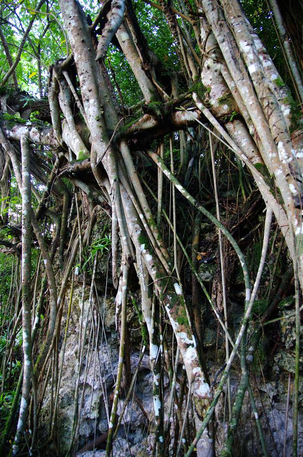 2010年夏のグアム旅行(最終回の前半)~ビーチに掛かる虹、Natur Trail~_c0223825_23311686.jpg