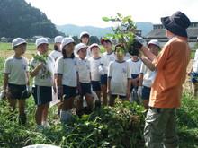 服間小学校の子供たちが枝豆の収穫をしました。_e0061225_1724885.jpg