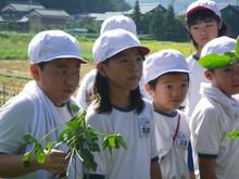 服間小学校の子供たちが枝豆の収穫をしました。_e0061225_1725973.jpg