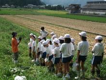 服間小学校の子供たちが枝豆の収穫をしました。_e0061225_1734260.jpg