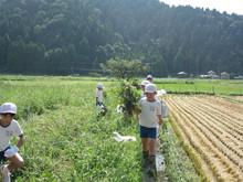 服間小学校の子供たちが枝豆の収穫をしました。_e0061225_1765996.jpg