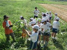 服間小学校の子供たちが枝豆の収穫をしました。_e0061225_1792084.jpg