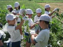 服間小学校の子供たちが枝豆の収穫をしました。_e0061225_179983.jpg