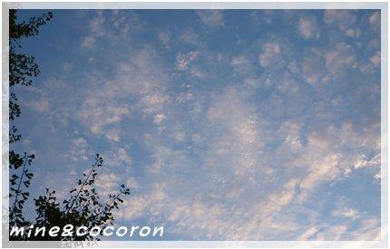 秋がきたーーー\(^o^)/_a0053987_15281759.jpg