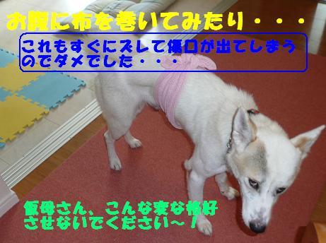 f0121712_10472469.jpg