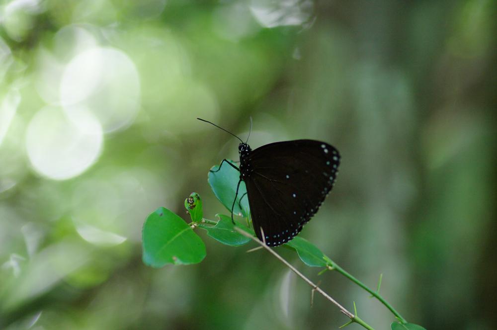 2010年夏のグアム旅行(最終回の前半)~ビーチに掛かる虹、Natur Trail~_c0223825_02548100.jpg