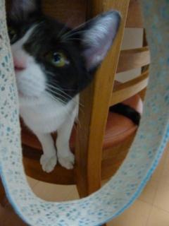 猫のお友だち 銀くん こちびちゃん編。_a0143140_2059146.jpg