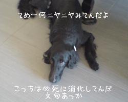 f0095047_10161078.jpg