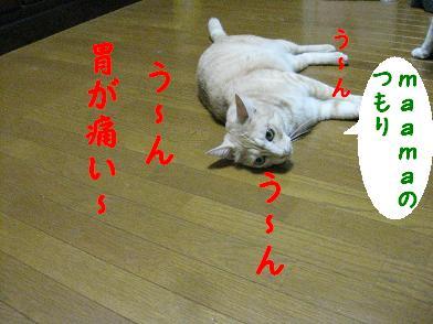b0151748_16562626.jpg