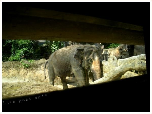 天王寺動物園 迫力ゾウさん♪_b0155684_18393056.jpg