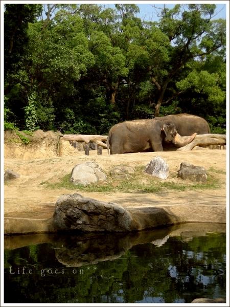 天王寺動物園 迫力ゾウさん♪_b0155684_18393116.jpg