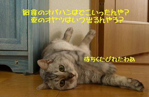 d0005397_312437.jpg