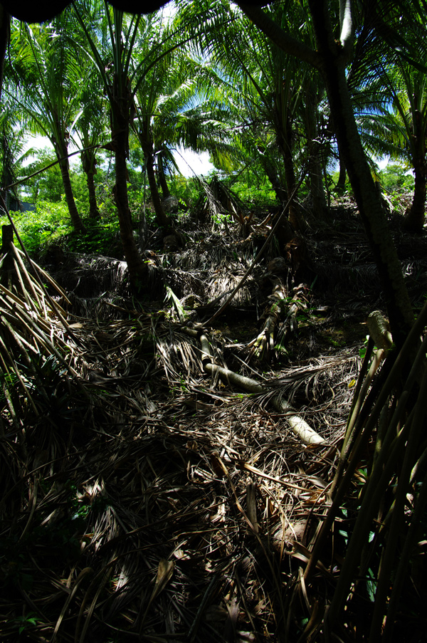 2010年夏のグアム旅行(最終回の後半)~ガン岬、ハマモトフルーツパーク~_c0223825_1104557.jpg