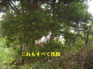 f0031037_17453691.jpg
