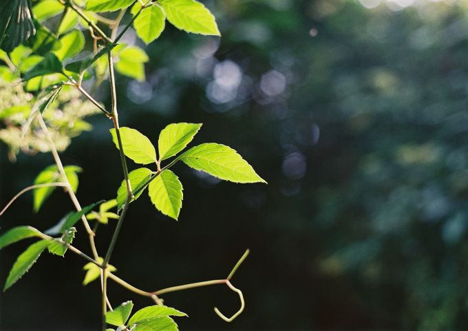 leaves_b0170947_1825504.jpg